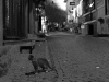 istanbul sokak kedisi fotoğrafı